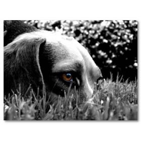 Αφίσα (λευκό, άσπρο, σκύλος, μάτι)